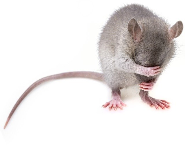 Ultrasonic Pest Repellers Reviews